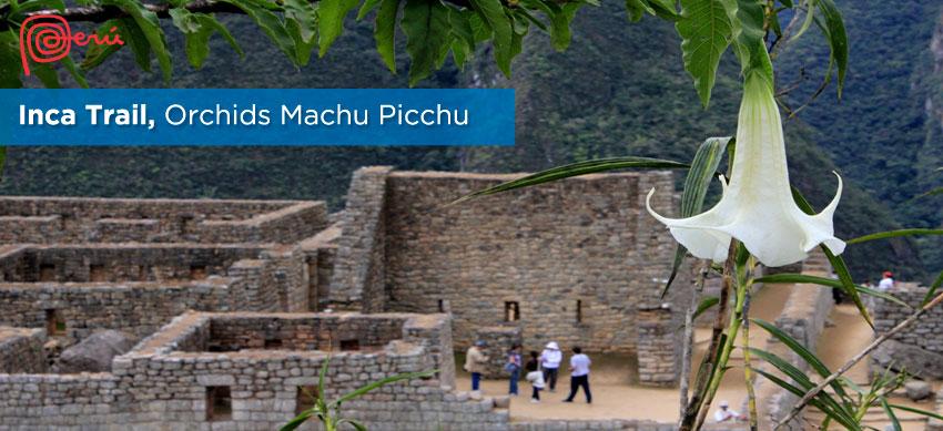 orchids at inca trail to machu picchu