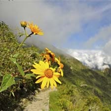 Megadiversity on the Inca Trail